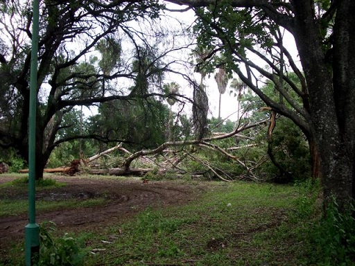 cp_mt_cyclone_damage_tree.jpg