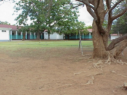 sch_jun_hill_classrooms_tree.jpg
